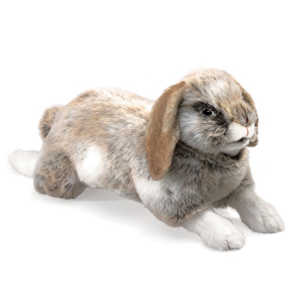 Hängeohr-Hase / Rabbit, Holland Lop