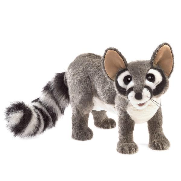 Katzenfrett (Waschbärfamilie) / Ringtail Cat
