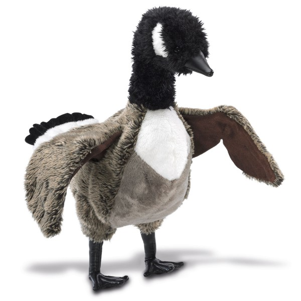 Kanada-Gans / Canada Goose