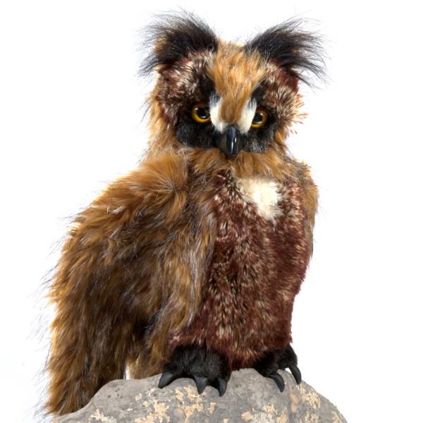 Eule, bewegliche Augendeckel / Great Horned Owl