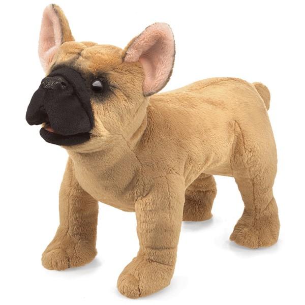Französische Bulldogge / French Bulldog