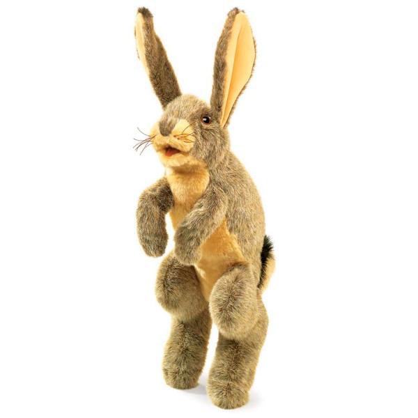 Feldhase / Jack Rabbit