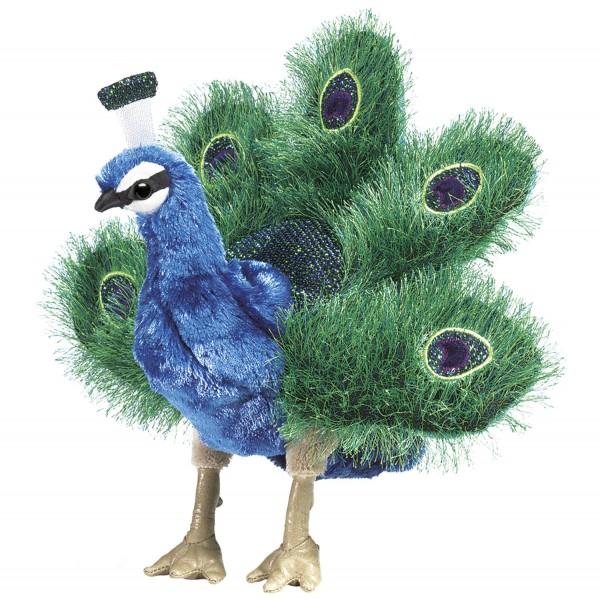 Kleiner Pfau / Small Peacock