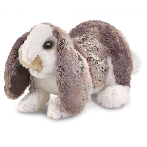 Hängeohr-Hasenbaby / Baby Lop Rabbit