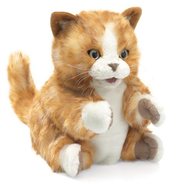 Kätzchen orange-braun / Orange Tabby Kitten