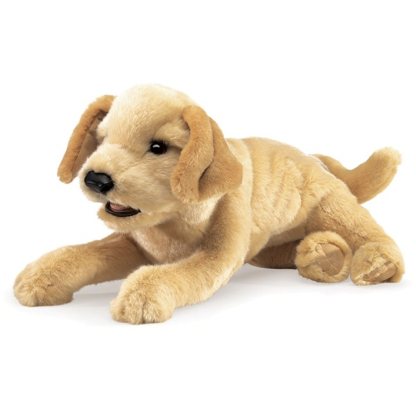 Labradorbaby, hellbraun / Yellow Labrador Puppy