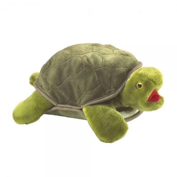 Schildkröte / Turtle