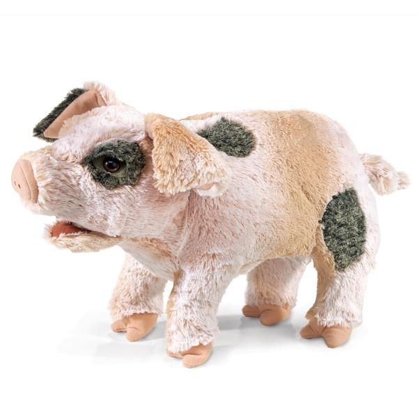 Grunzendes Schweinchen / Grunting Pig