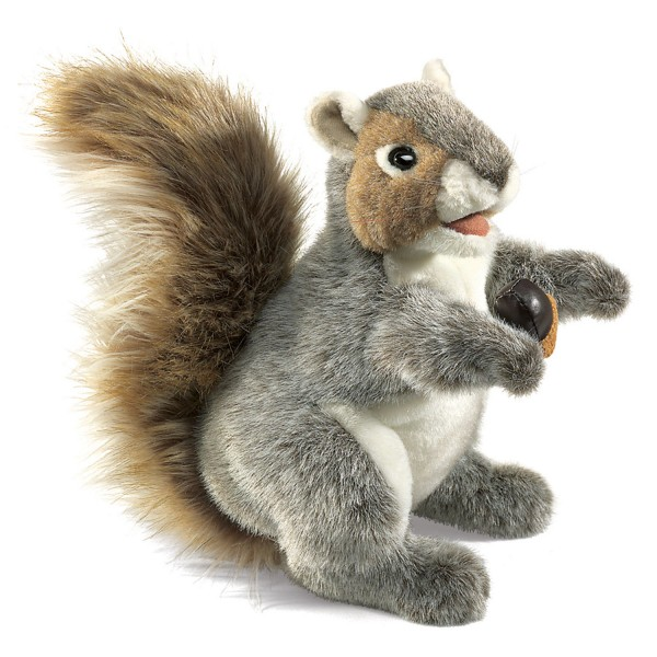 Graues Eichhörnchen / Grey Squirrel