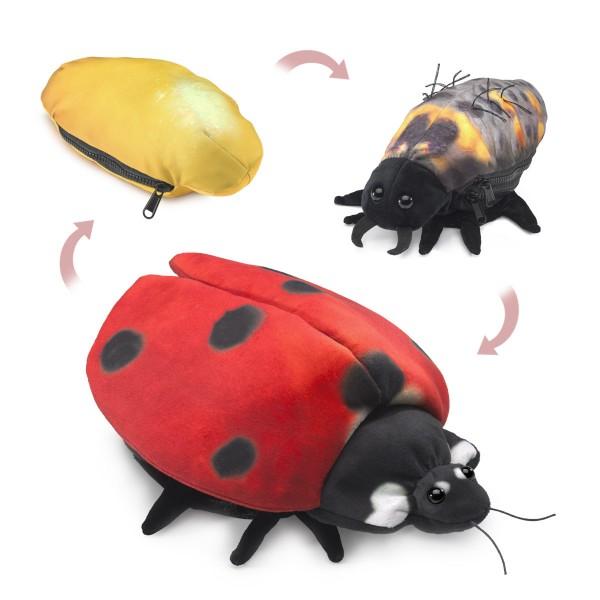 Marienkäfer Metamorphose / Ladybug Life Cycle