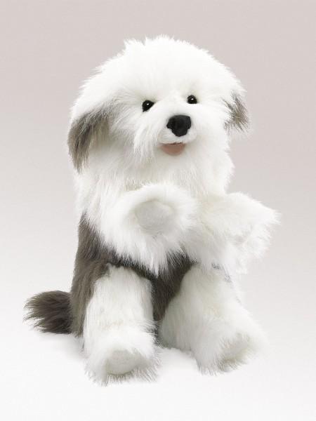 Bobtail / Sheepdog
