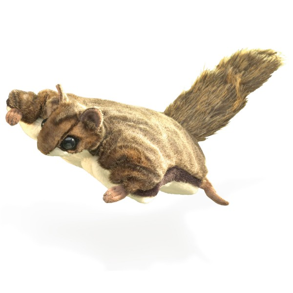 Flughörnchen / Flying Squirrel