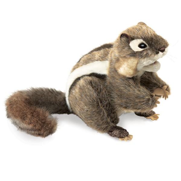 Streifen-, Backenhörnchen / Chipmunk Eastern