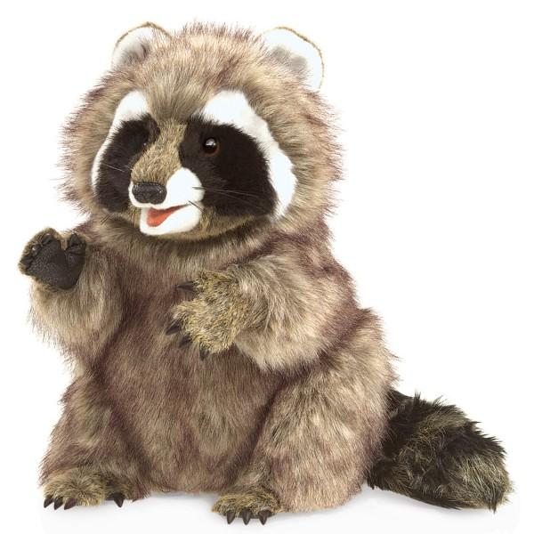 Waschbär / Raccoon