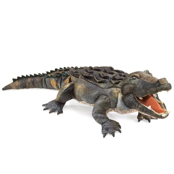 Amerikanischer Alligator / American Alligator