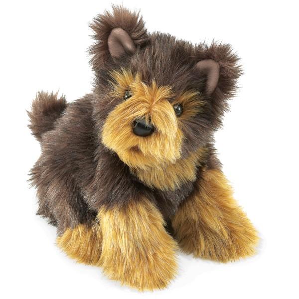 Yorkshire Terrier Welpe / Yorkie Pup