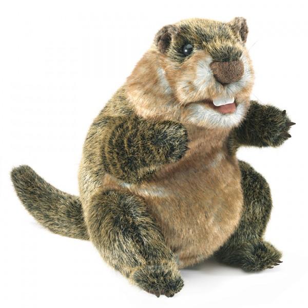 Murmeltier / Groundhog