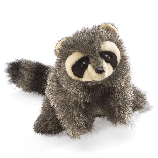Kleiner Waschbär / Baby Raccoon