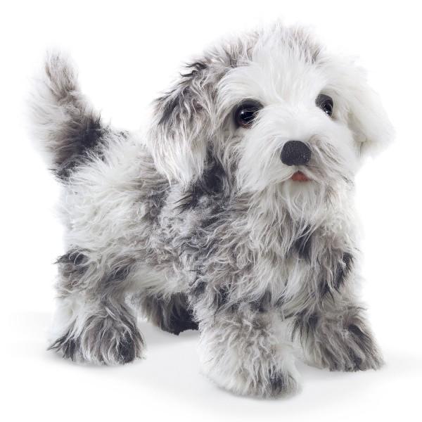 Shih Tzu Welpe / Shih Tzu Puppy