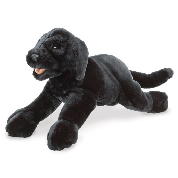 Labrador Welpe, schwarz / Black Labrador Puppy